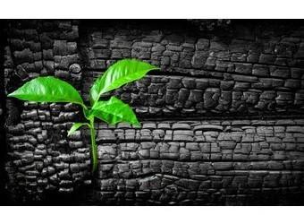 charbon-vegetal-340x250