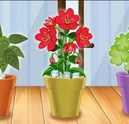 Grâce à cette astuce facile, plus aucune de vos plantes d'intérieur ne mourront !
