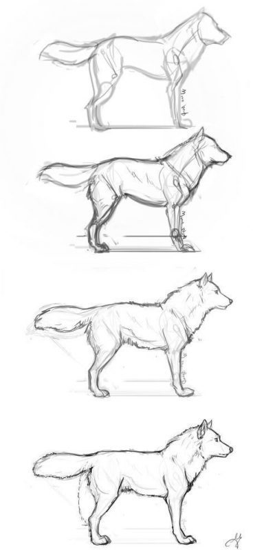 How to make a drawing of a dog easily