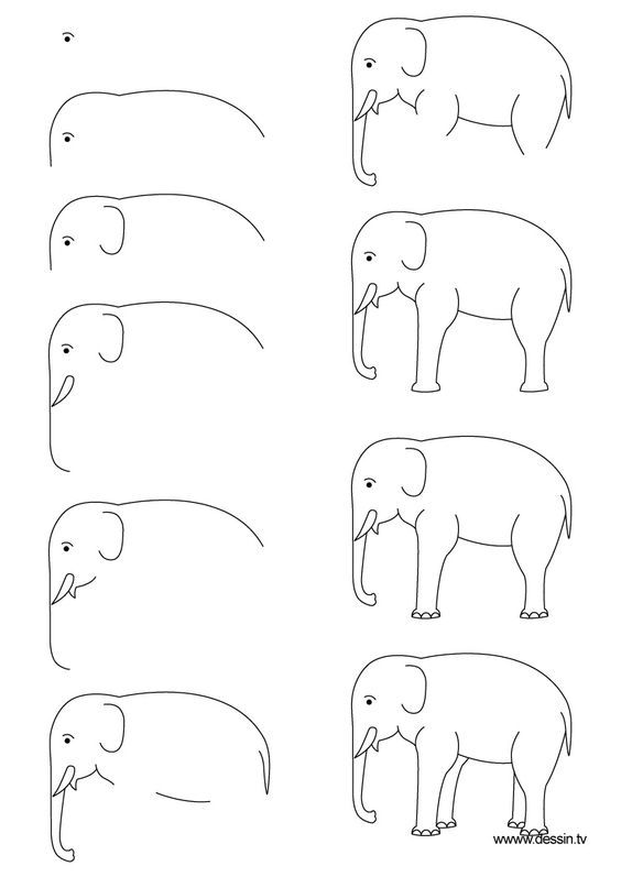 How to draw an Elephant easily