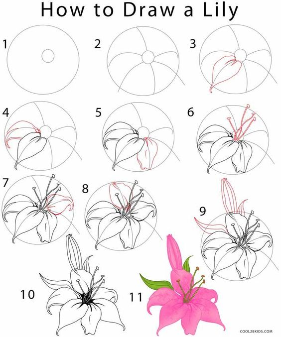 drawing tutorial for a beautiful Lily flower